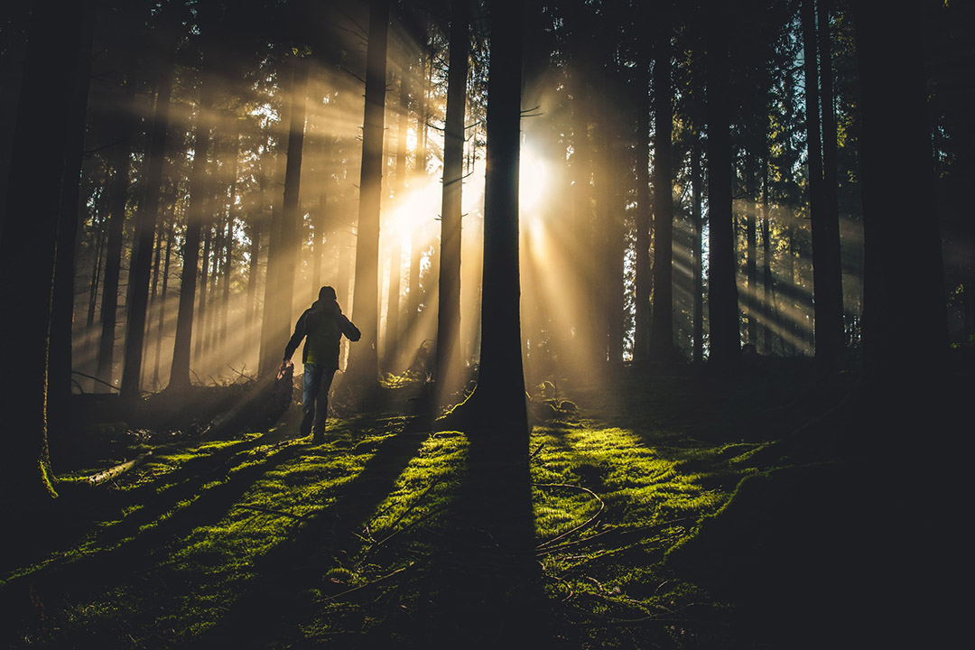 A person navigates a forest and walks toward the sun