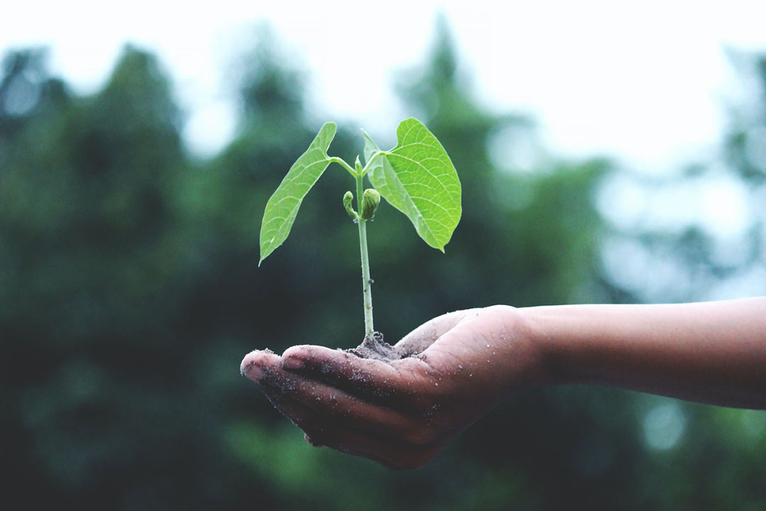 A person holds a plant in their hand