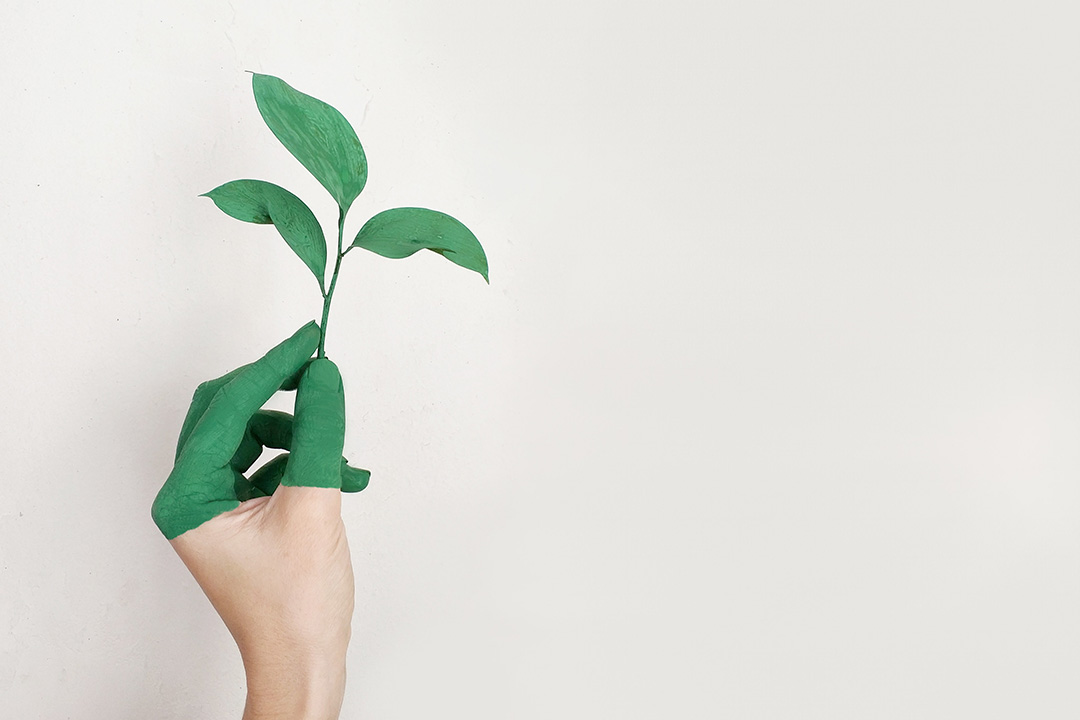 A hand hold a green plant on a white background